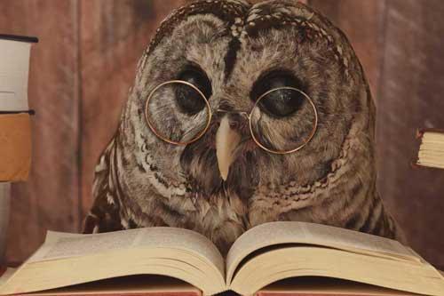 Tierheilpraktiker - Eule liest ein Buch